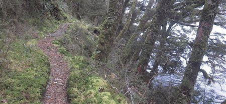 A great track around Lake McKellar    Greenstone Track, Greenstone Conservation Area