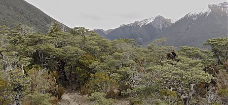 Day 9, a different type of vegetation on the way down to Casey Hut. |  Arthurs Pass blog