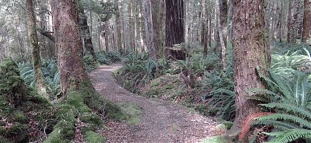 There's plenty of terrific track through the beech tree forest. | Kepler Track, Fiordland National Park