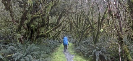 Jutta love the Old Man's Beard on the fuschias, maybe she just loves beards. | Milford Track, Fiordland National Park