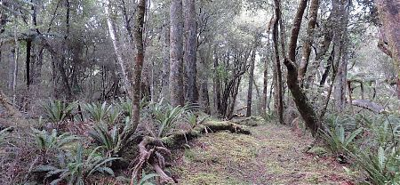 Very few tramp around from Freshwater to Freds Camp but it can be beaut. | Southern Circuit, Stewart Island
