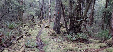 Tramping in the Upper Rakeahua valley, beyond the bogs, is often sublime. | Southern Circuit, Stewart Island