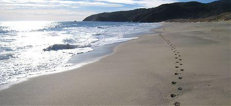 Mason Bay Beach, Rakiura National Park, Stewart Island