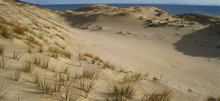Smoky Beach, Rakiura National Park