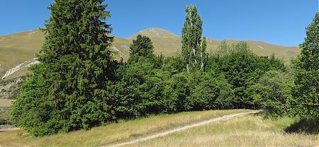 The Macetown campsite is under those old trees.   Macetown campsite, Arrow River near Arrowtown