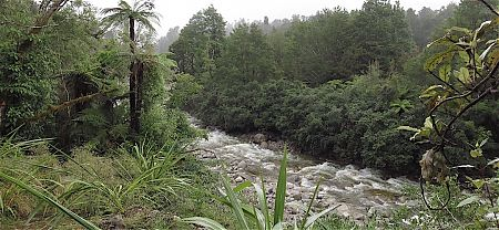 After the rain the river is up substantially. | Little Wanganui River, Kahurangi National Park