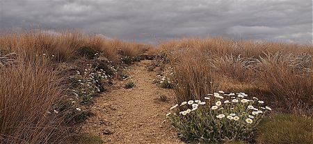 Looking fairly stormy once up onto the Tablelands.   near Salisbury Lodge, Kahurangi National Park