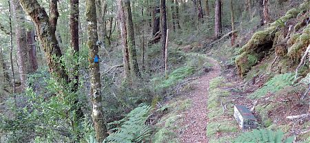 A stoat trap on the track. | Wangapeka Track, Kahurangi National Park