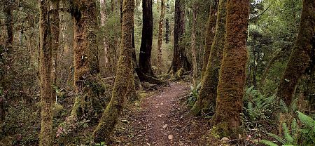 The bike track goes through some fantastic forest. | Old Ghost Road