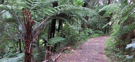 Coastal Track, Abel Tasman National Park 4