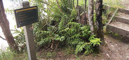 Akersten Bay campsite, Coastal Track, Abel Tasman National Park