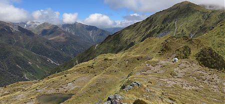Bivvy at the saddle. Water from that tarn. | Toaroha Saddle Bivvy, Toaroha River, West Coast
