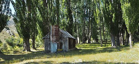 The hut is surrounded by Lombardy poplars. | Black Spur Hut, Seymour Stream