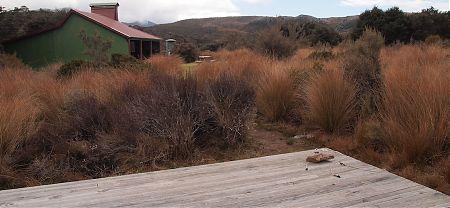 Gouland Downs camping, Heaphy Track, Kahurangi National Park