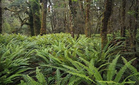 Just follow the trail markers through the chest high fern.