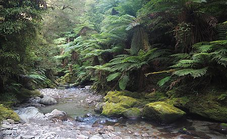 The trail marker just direct you down the creek. Magnificent West Coast bush around.