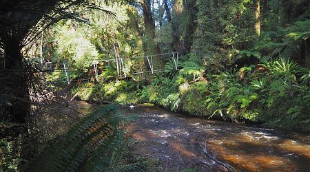 Only the one three-wire bridge to get across. Easier than you might think. | South Coast Track, South Fiordland