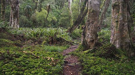 Ain't that a forest track to have to yourself for the next 10 days.  |  North West Circuit, Stewart Island/Rakiura
