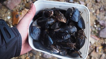 Dinnertime at Freds Camp. The blue mussel entree is near the front door at low tide.    Southern Circuit, Stewart Island/Rakiura