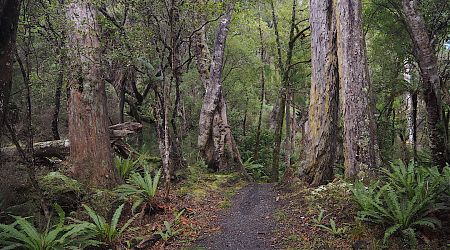 The last day was walking out to civilisation on the easy track.  |  Rakiura/North west Circuit, Stewart Island/Rakiura