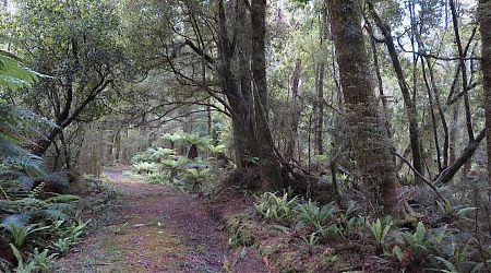 Too easy. But it has its moments later on.   Haast Paringa Cattle Trail