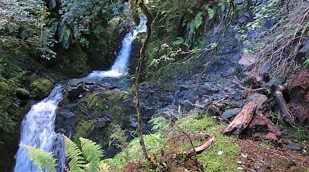 The drop is not shown. But you can sense the uneasiness this causes. | Chasm Creek, Haast Paringa Cattle Trail