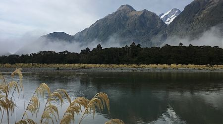 That's McKerrow Island where you cross to the hut. The river is down substantially in the morning.   Hollyford Track, Fiordland National Park