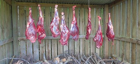 deer legs, Huranui Hut, Lake Sumner Forest Park