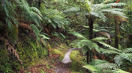 The walk into Blue River Hut is scenic and quite cruisy.   Haast Paringa Cattle Track, South Westland