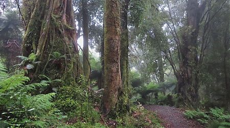 Forest and new track near Pororari Hut. | Paparoa Great Walk, West Coast
