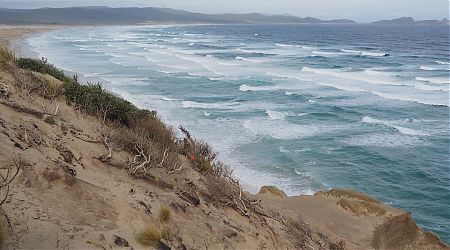 The high route around the bluff at Mason Bay gives a great view. Bad track.  | Northwest Circuit, Rakiura National Park
