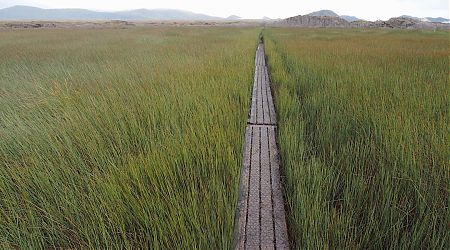 Walkway through Chocolate Swamp between Mason Bay and Freshwater Huts. | Northwest Circuit, Rakiura National Park
