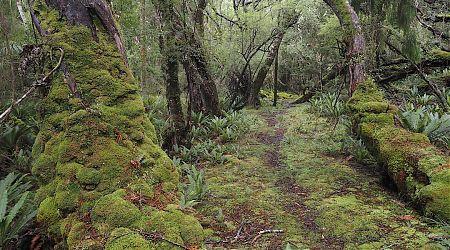 Gorgeous track on the way to Freds Camp Hut. | Southern Circuit, Rakiura National Park