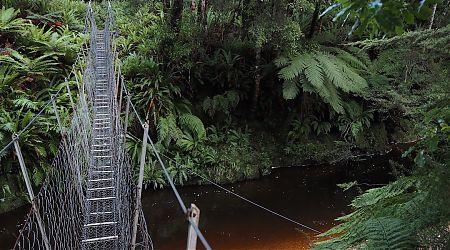 Swingbridge over a typical very black tea, no sugar, river.    South Coast Track, Fiordland National Park